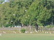 Egrets at Polo Fields