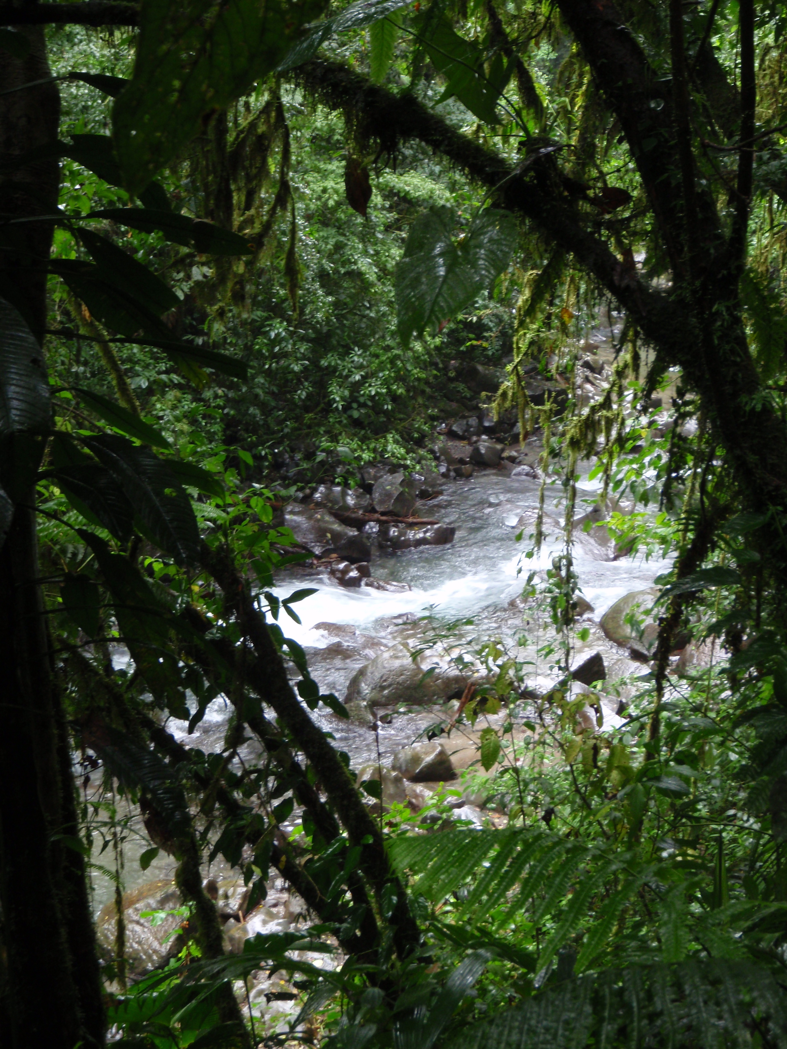 Downstream of Fortuna Falls