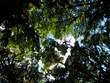 Looking up at the canopy