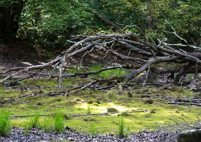 Swamp in Billerica